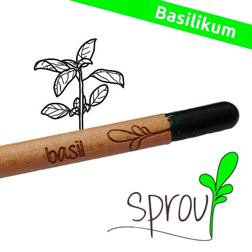 Image of   Sprout (Basil)