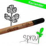 Sprout (Cilantro)