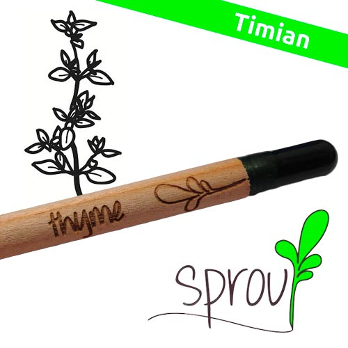 Image of   Sprout (Thyme)